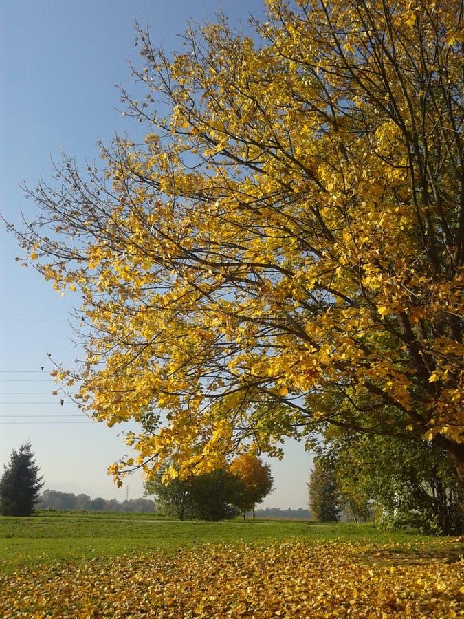 De gele herfst royalty-vrije stock afbeelding