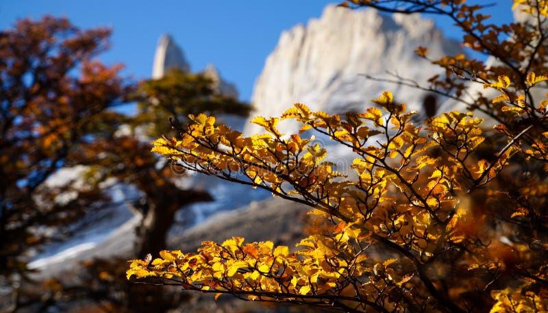 De gele herfst doorbladert met Los torres berg op achtergrond in Torres del Paine National Park, Chili royalty-vrije stock foto
