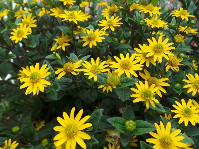 De gele kleine bloemen sluiten omhoog groene bladeren royalty-vrije stock fotografie