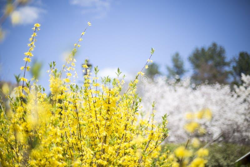 De gele lente royalty-vrije stock fotografie