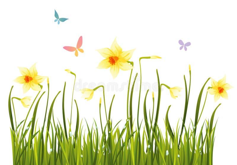 De gele narcissen van de lente royalty-vrije illustratie