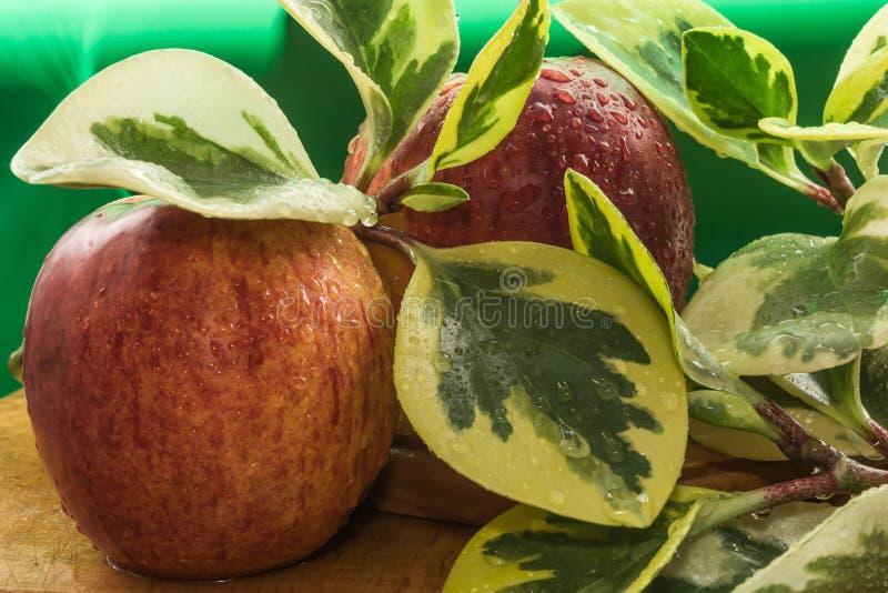 De gele rode appelen en de takken met grote groene gele bladeren liggen behandeld met waterdalingen op een houten lijst, samenste stock foto