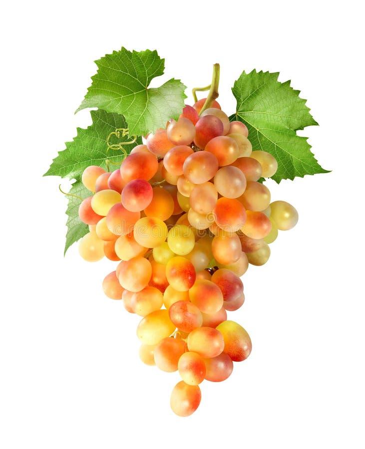 De gele rode die druiven bundelen verticaal op wit wordt geïsoleerd royalty-vrije stock afbeelding