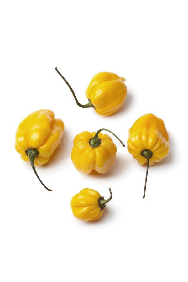 De gele Schotse peper van de bonnetSpaanse peper stock foto