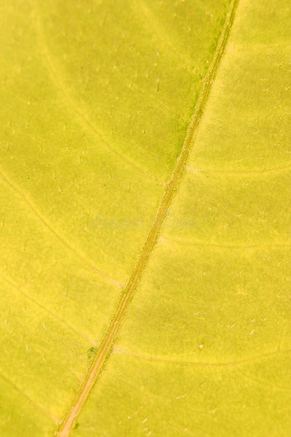 De gele Textuur van het Blad royalty-vrije stock afbeeldingen