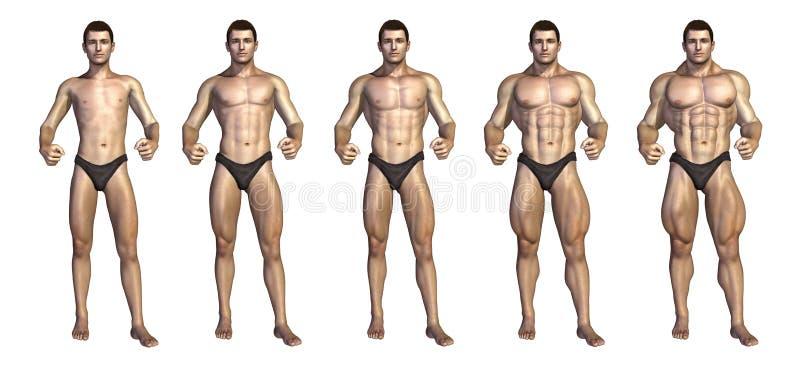 De Geleidelijke Transformatie van de bodybuilder stock illustratie