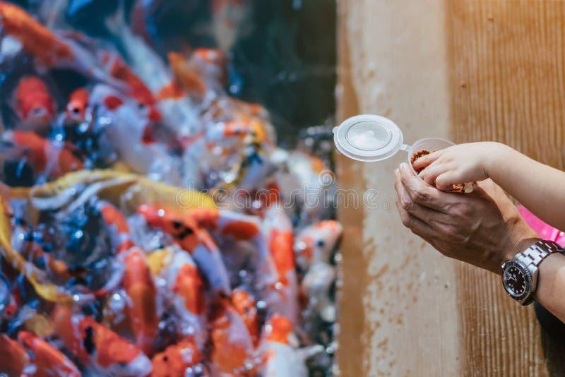 De gelukfamilie helpt elkaar om vele buitensporige Koi-karper in vijver van Japanse tuin te voeden stock afbeeldingen