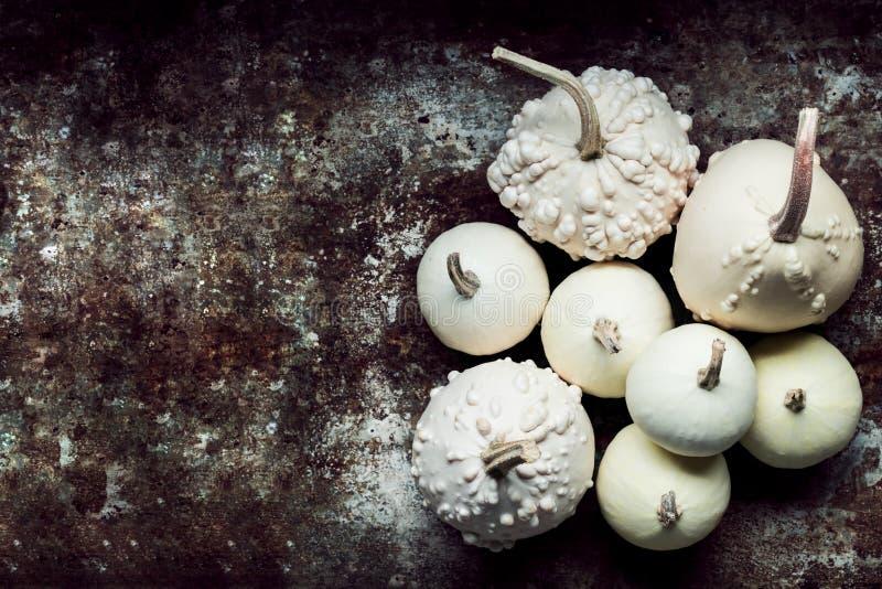 De gelukkige Achtergrond van de Dankzegging Kleine witte pompoenen op rustieke metaalachtergrond met exemplaarruimte royalty-vrije stock fotografie