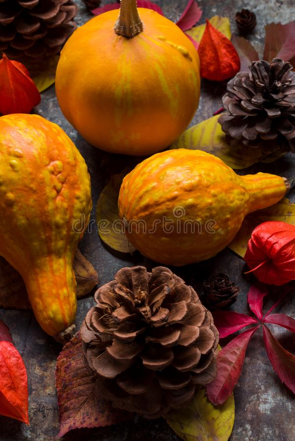 De gelukkige Achtergrond van de Dankzegging Selectie van diverse pompoenen op donkere achtergrond Autumn Harvest en Vakantie stil royalty-vrije stock foto