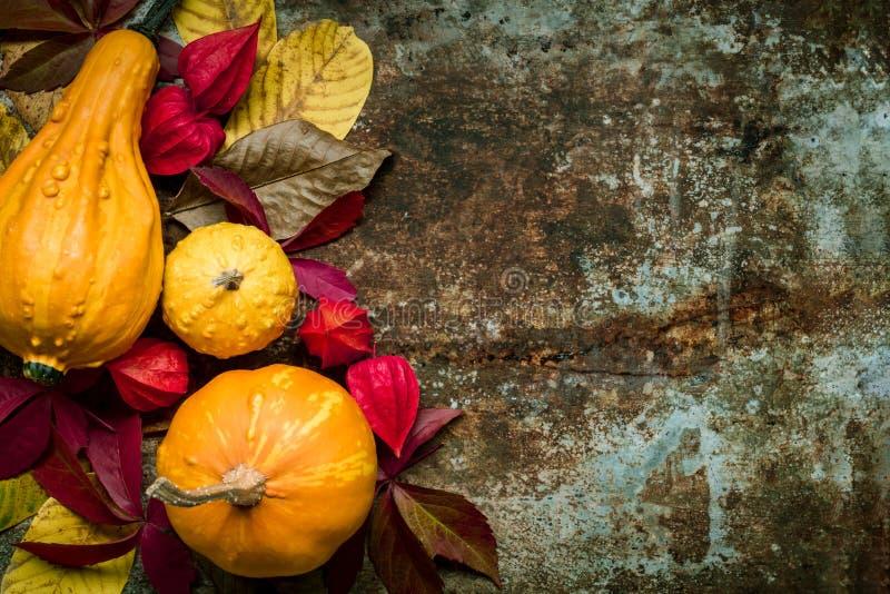 De gelukkige Achtergrond van de Dankzegging Selectie van diverse pompoenen op donkere metaalachtergrond Autumn Harvest en Vakanti royalty-vrije stock afbeelding