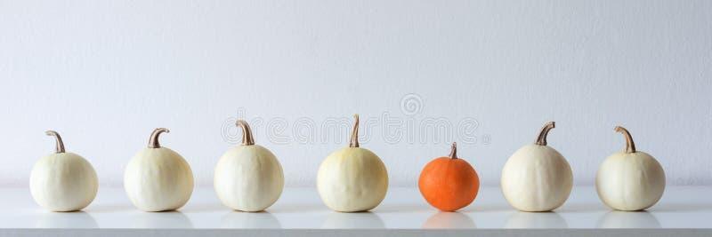 De gelukkige Achtergrond van de Dankzegging Selectie van diverse pompoenen op witte plank tegen witte muur Moderne seizoengebonde stock fotografie