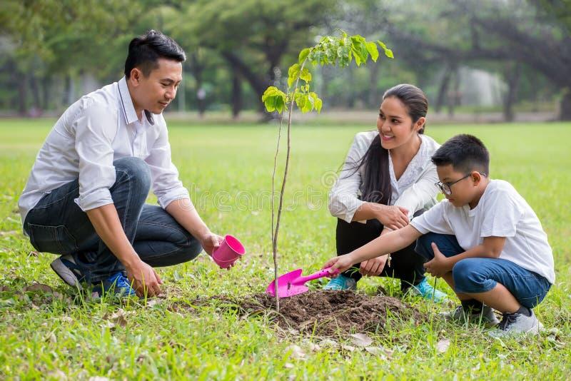 de gelukkige Aziatische Familie, de ouders en hun kinderen planten samen jong boompjeboom in park vadermoeder en zoon, jongen die stock foto's
