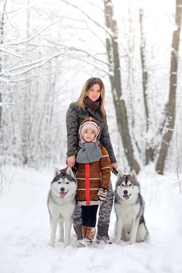 De gelukkige familie met honden huskies stock afbeeldingen