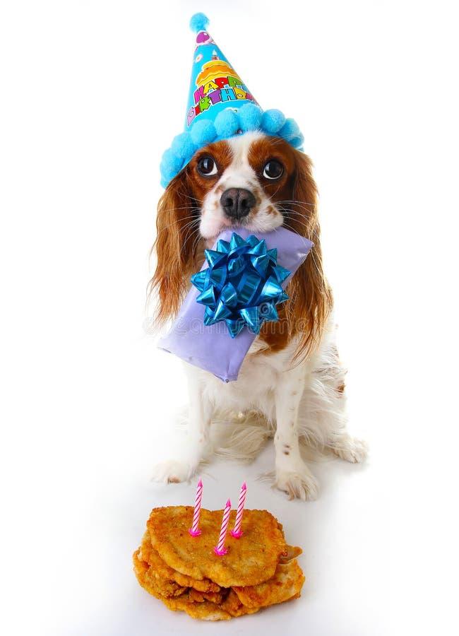 De gelukkige foto van de verjaardagshond De arrogante hond van het het spanielpuppy van koningscharles viert 3 Verjaardag Drie ja stock fotografie