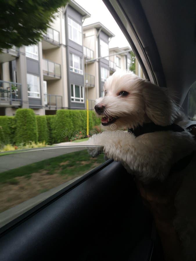De gelukkige hond stock afbeeldingen