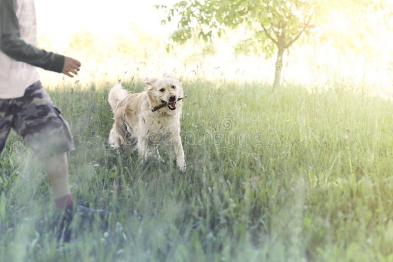 De gelukkige hond brengt de stok aan zijn jonge eigenaar stock fotografie