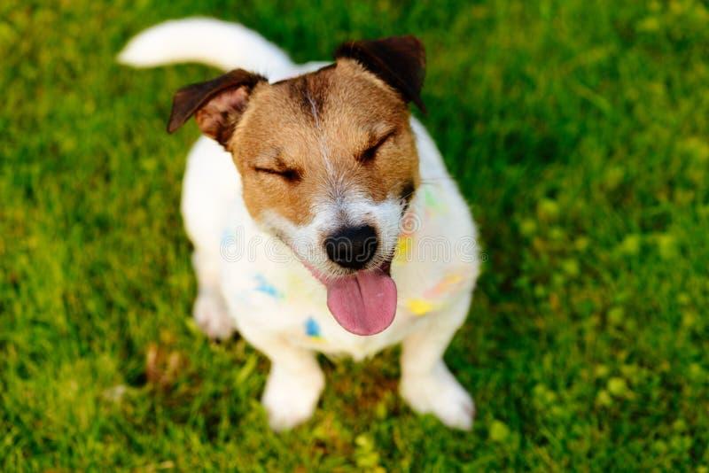 De gelukkige hond met gesloten ogen en dwaas kijkt bevlekt met verf stock afbeeldingen
