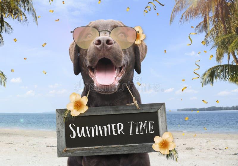 De gelukkige hond op een de zomervakantie op het strand tussen palmen en bloemen met tekst op teken scheept de zomertijd in royalty-vrije stock fotografie