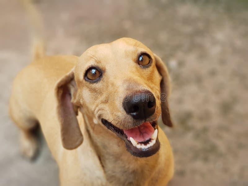 De gelukkige hond Zie mijn andere werken in portefeuille royalty-vrije stock fotografie