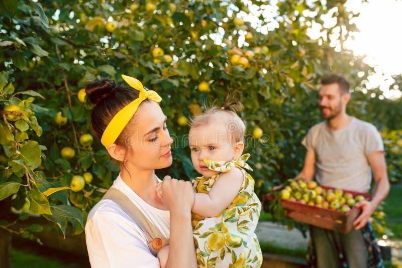 De gelukkige jonge familie tijdens het plukken appelen in een tuin in openlucht royalty-vrije stock foto