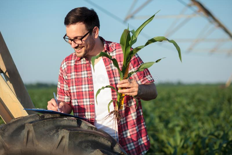De gelukkige jonge landbouwer of de agronoom die jong graan meten plant stamgrootte met een heerser, die gegevens schrijven aan e stock afbeelding