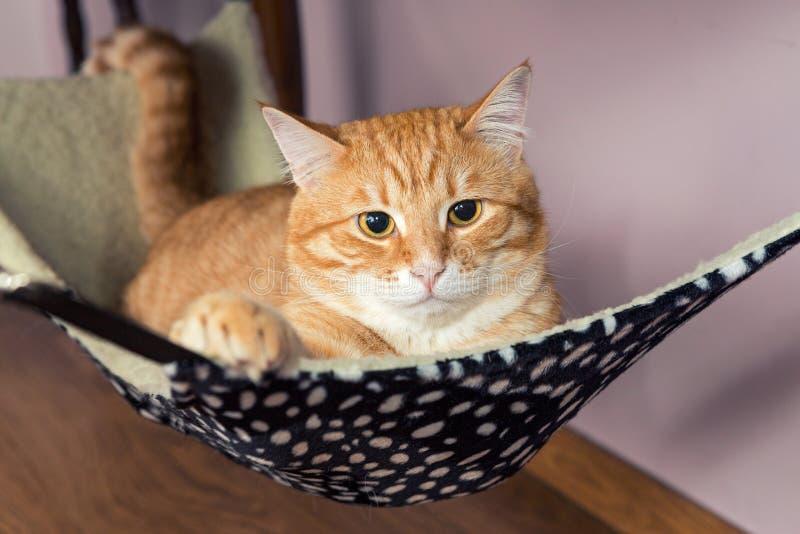 De gelukkige Kat van de Gember royalty-vrije stock afbeelding