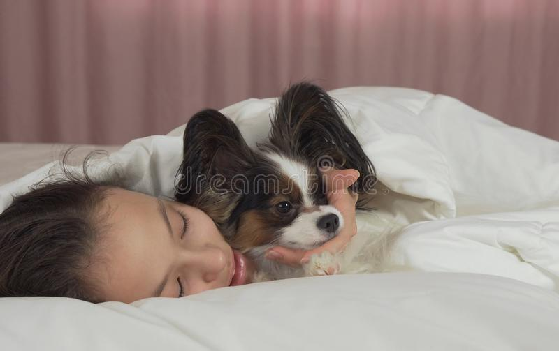 De de gelukkige kussen en spelen van het tienermeisje met hond Papillon in bed stock afbeeldingen