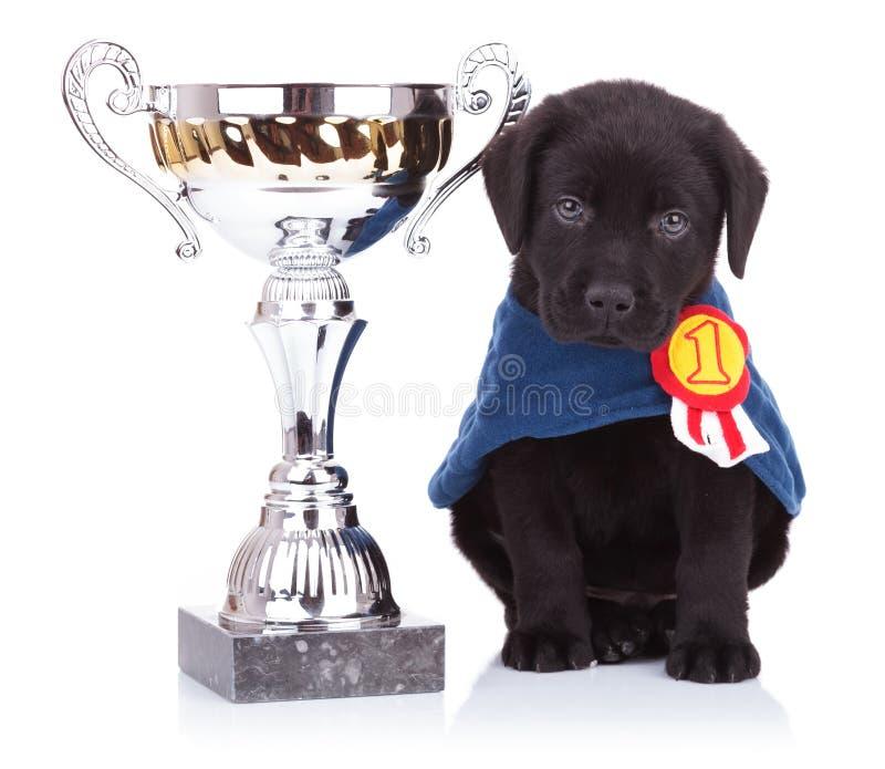 De zitting van de het puppyhond van de labrador dichtbij een grote trofee stock foto