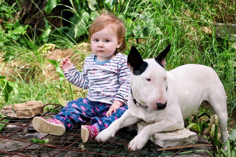 De gelukkige leuke vrouwelijke baby en de hond zitten in tuin Het kind speelt met de Engelse witte hond van Bull terrier buiten i stock foto's