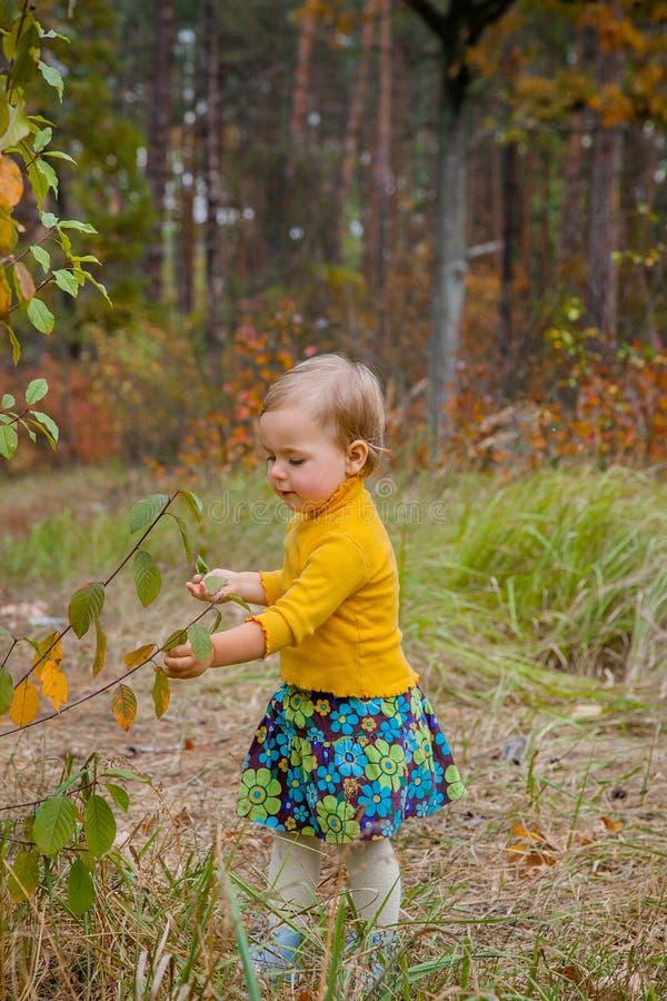 De gelukkige meisjegangen in de herfstpark, verzamelt bladeren stock foto