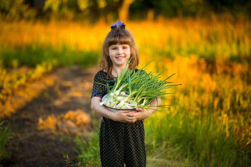 De gelukkige ouders van de meisjehulp om uien in tuin te scheuren stock fotografie
