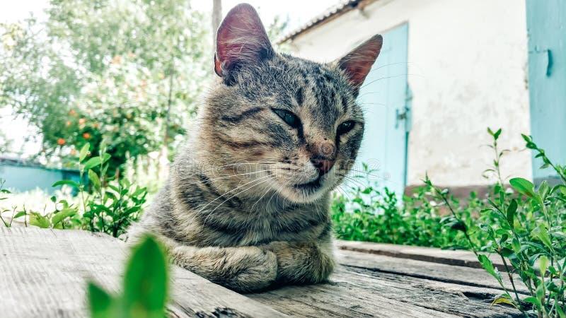 De gelukkige slaperige kat ligt op houten planken onder green stock foto's