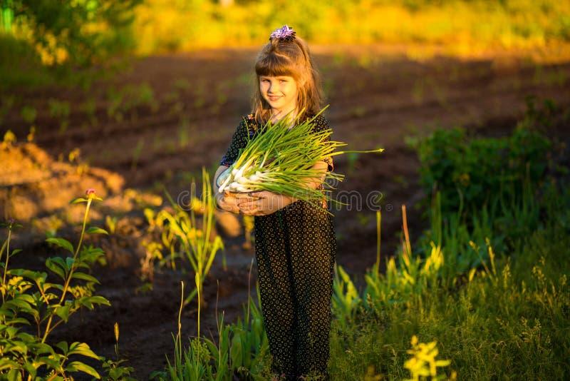 De gelukkige uien van de de oudersscheur van de meisjehulp in tuin royalty-vrije stock afbeeldingen
