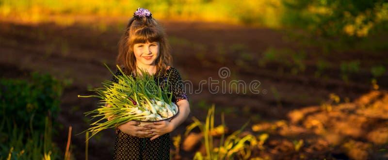 De gelukkige uien van de de oudersscheur van de meisjehulp in tuin royalty-vrije stock fotografie