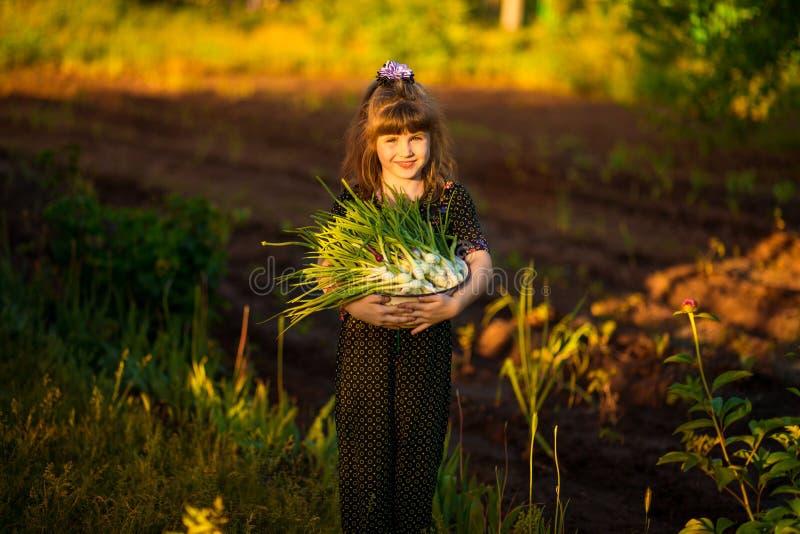 De gelukkige uien van de de oudersscheur van de meisjehulp in tuin stock afbeeldingen