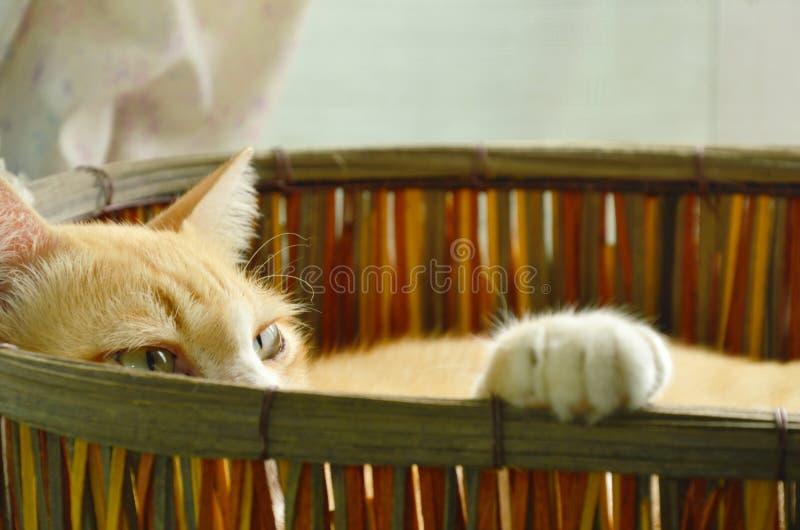 De gemberkat slaperig in geweven mand en de lift handtastelijk worden omhoog op rand stock afbeelding