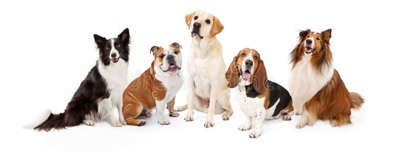 De gemeenschappelijke Familiehond kweekt Groep royalty-vrije stock foto's