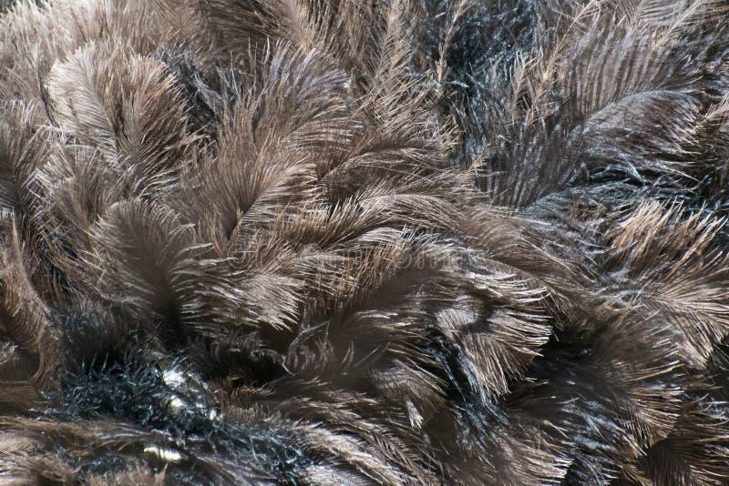 De gemeenschappelijke textuur van struisvogelveren stock foto's