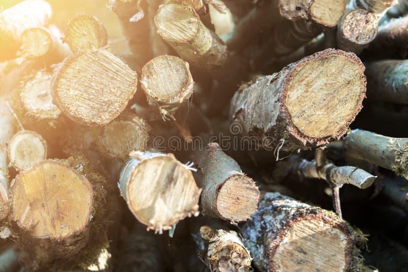 de gemorste pijnboomlogboeken worden gestapeld bovenop elkaar, in stapels, vernietiging van het bos, het felling van bomen, achte stock afbeeldingen