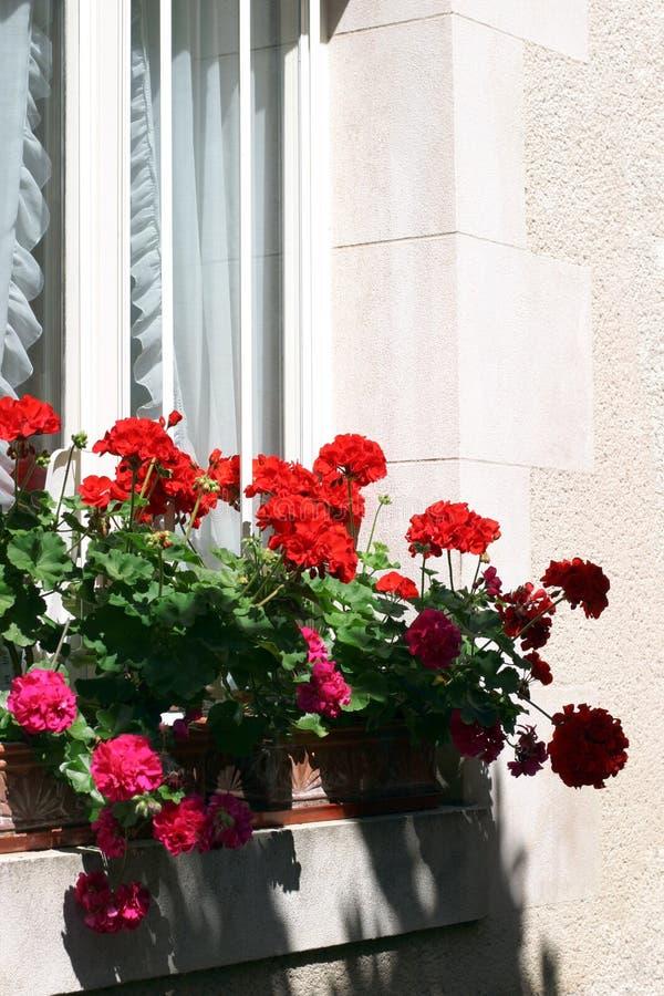 De Geraniums van het venster royalty-vrije stock foto