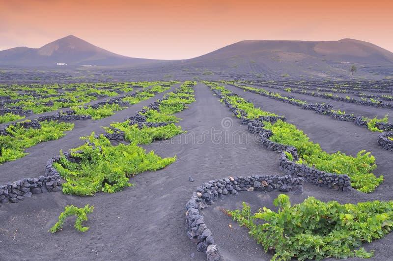 De Geria vingårdarna. royaltyfri fotografi
