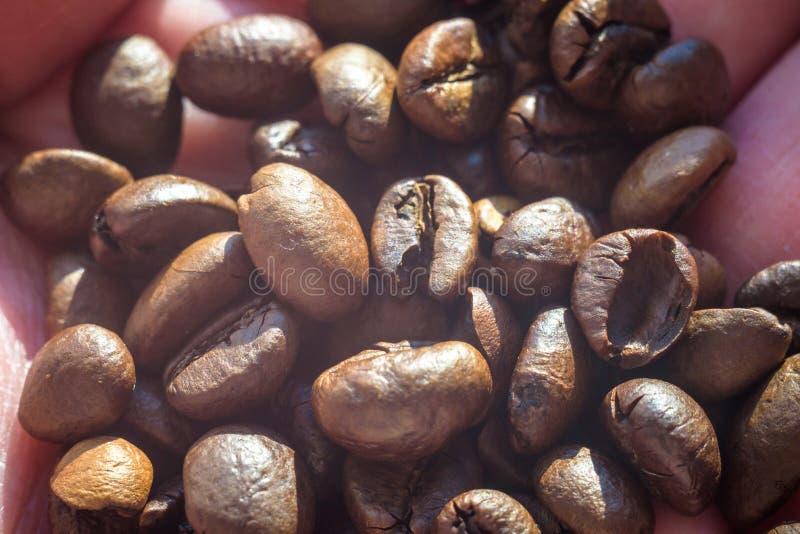 De geroosterde koffiebonen, kunnen als achtergrond worden gebruikt royalty-vrije stock afbeeldingen