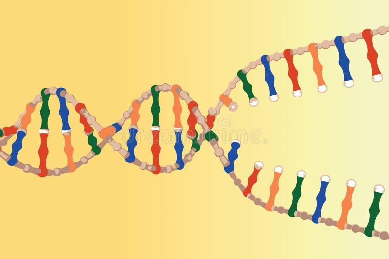 De gescheiden bundels van DNA vector illustratie