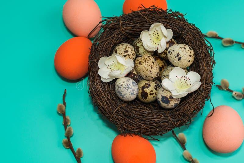 De geschilderde eieren en de kwartelseieren in een nest met wilg vertakken zich op een turkooise achtergrond stock foto