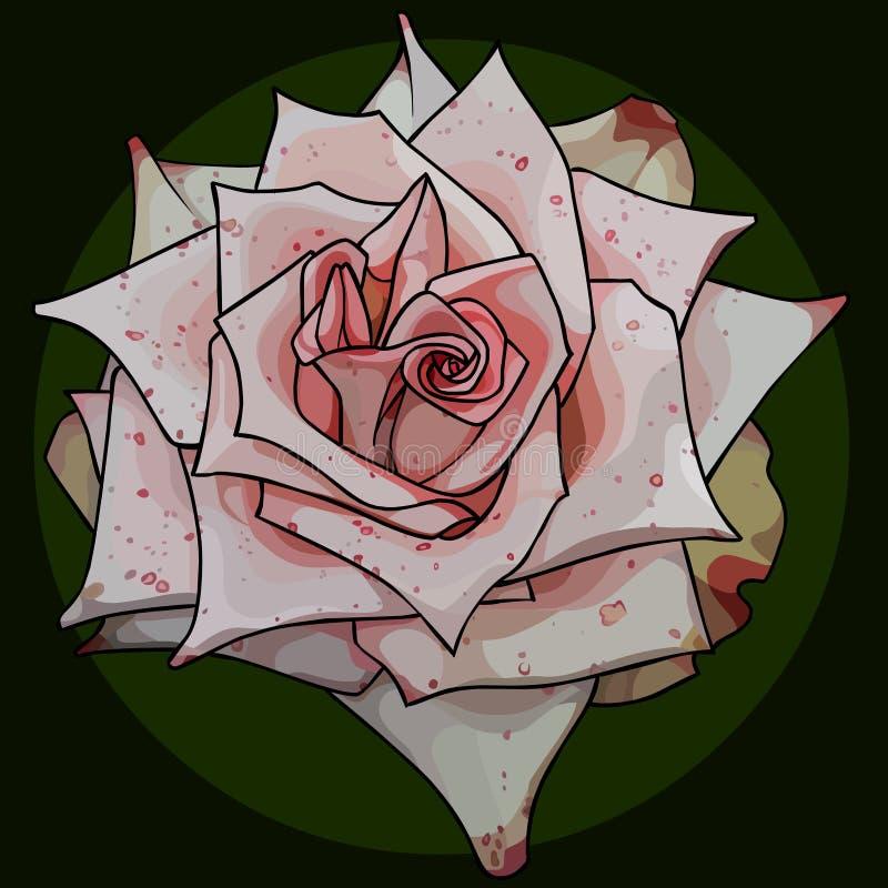 De geschilderde knop van acicular nam in roze gespikkeld toe vector illustratie