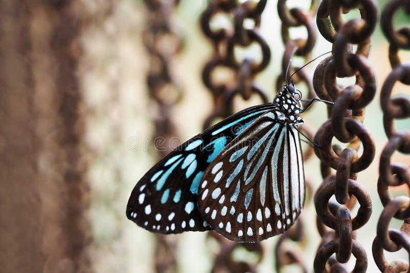 De gesloten omhoog blauwgroene achtergrond van de vlinder roestige ketting stock afbeeldingen