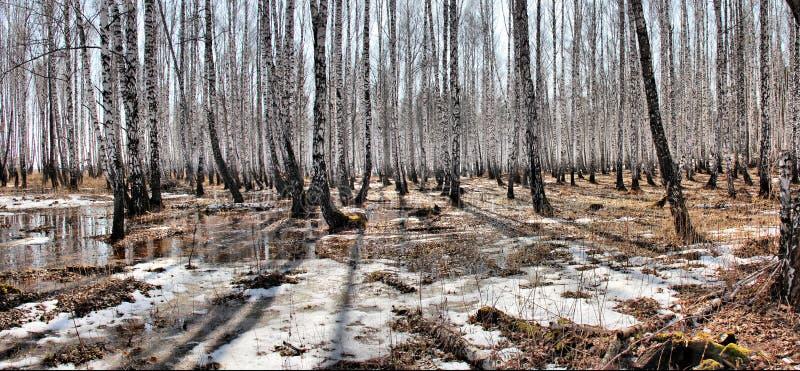 De gestikte stroom van de de lentehitte van de Panorama Bosberk stock fotografie