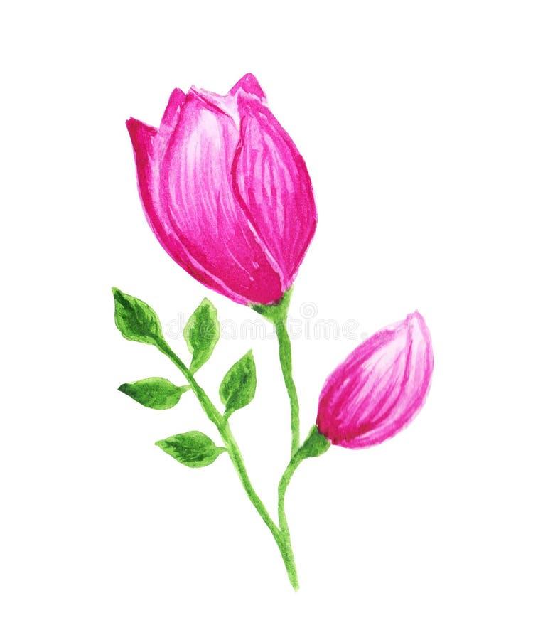 De gestileerde abstracte die tulp als of nam toe als bloem in roze, magenta kleuren wordt geschilderd stock afbeelding