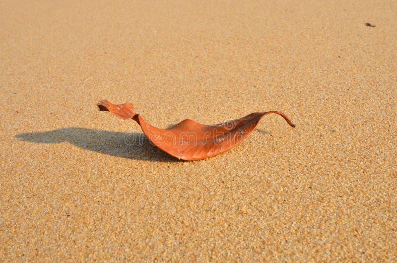 De gestorven bladslaap op het zand stock fotografie