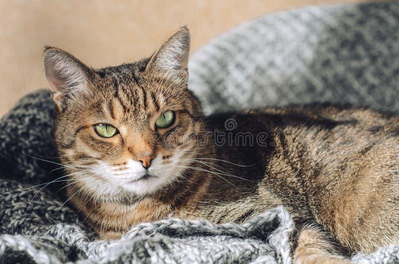 De gestreepte katkat ligt op een grijze gebreide deken in de zon Een huisdier royalty-vrije stock foto's